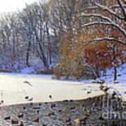 The Lake In Winter Art Print