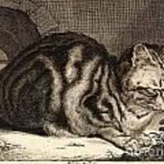The Large Cat  Art Print
