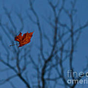 The Last Leaf Fell Art Print