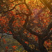 The Last Leaves On The Tree Art Print by Rebecca Cearley