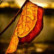 The Leaf Across The River Art Print