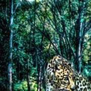 The Leopard Is Hungry Art Print
