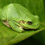 The Little Frog Art Print