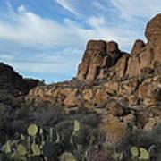 The Living Desert Of Arizona Art Print