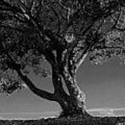 The Lone Tree Black And White Art Print