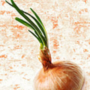 The Lonely Onion Art Print