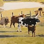 The Longhorn Cows Art Print