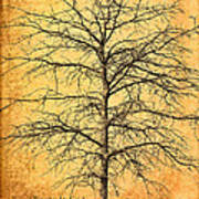 The Lord Jesus Is The Tree Of Life Art Print