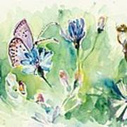 The Love Between Butterfly And Chicory Art Print