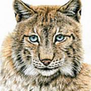 The Lynx Art Print