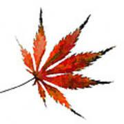 The Magical Colors Of Fall Art Print
