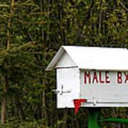 The Male Box Art Print