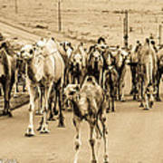 The March Of The Camels Art Print
