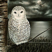 The Marsh At Night Art Print