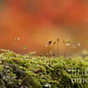 The Miniature World Of Moss  Art Print