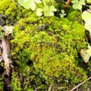 The Miniature World Of The Moss Art Print