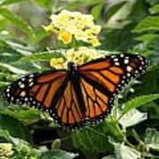 The Monarch Art Print