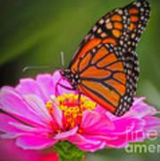 The Monarch's Flower Art Print