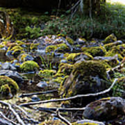 The Moss In The River Stones Art Print