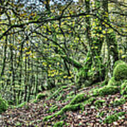The Mossy Creatures Of The  Old Beech Forest 5 Art Print