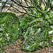 The Mossy Creatures Of The Old Beech Forest Art Print