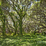 The Mysterious Forest - The Magical Trees Of The Los Osos Oak Reserve. Art Print