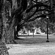 The Oaks Of Audubon Park Art Print