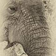The Old Elephant Bull Art Print