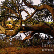 The Old Tree At The Ashley River In Charleston Art Print by Susanne Van Hulst