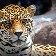 The Ole Leopard Don't Change His Spots Art Print