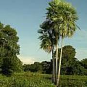The Pantanal Art Print