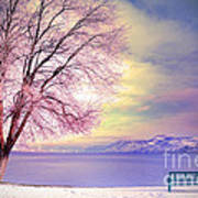 The Pastel Dreams Of Winter Art Print