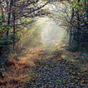 The Paulinskill Trail By James Figielski Art Print