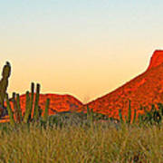 The Peak And Cardon Cacti In The Sunset In San Carlos-sonora Art Print