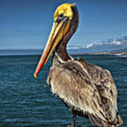The Pelican Of Oceanside Pier Art Print
