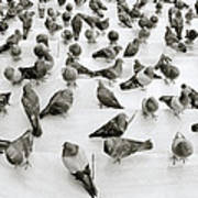 The Pigeon Art Print