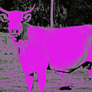 the Pink Cow Art Print