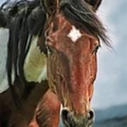 The Pinto Horse Portrait Art Print