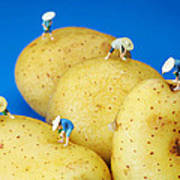 The Planting On Potatoes Little People On Food Art Print
