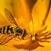 The Pollen Hunter Art Print