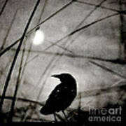 The Raven And The Orb Art Print by Sharon Coty