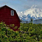 The Red Barn And Mt. Hood Art Print