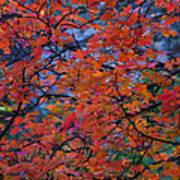 The Reds Of Autumn  Art Print