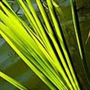 The Reeds Art Print