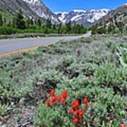 The Road Into Lundy Canyon Art Print