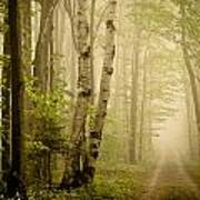 The Road Through The Woods Art Print