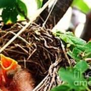The Robins Nest Art Print