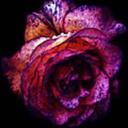 The Royal Rose Art Print by Stephanie Hollingsworth