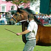 The Running Of The Stallions Art Print