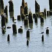 The Sea Gulls Art Print